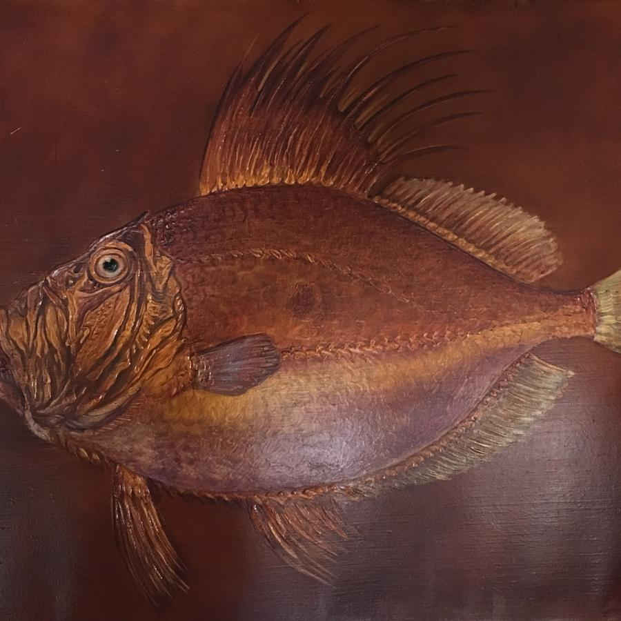 Oil on Board of John Dory fish