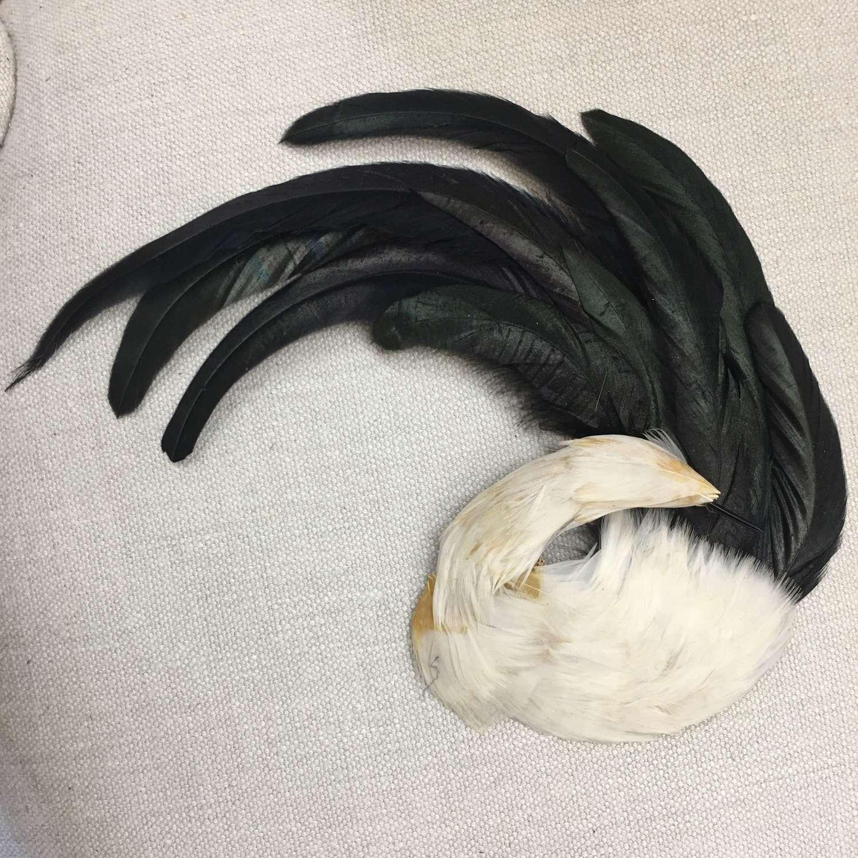 Vintage bird feather headpiece
